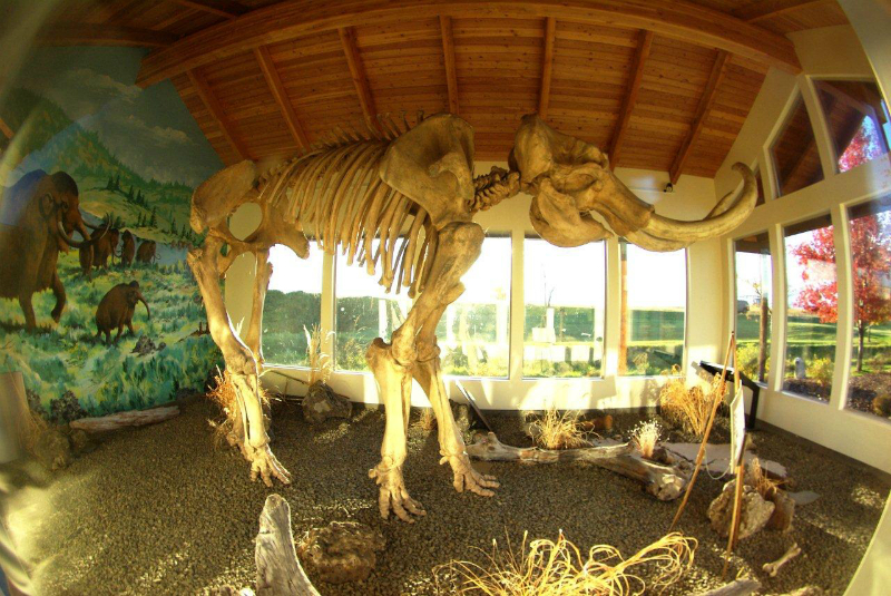 Columbian Mammoths Discovered Near Tolo Lake In